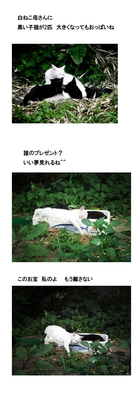 ねこブログ.jpg
