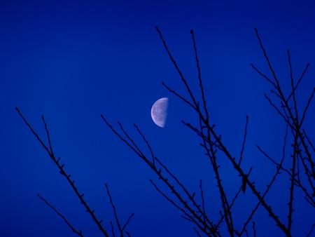 朝月b.jpg