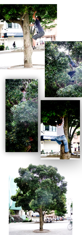木登りブログ.jpg