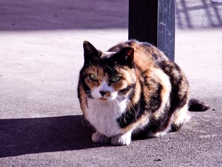 猫の肖像2b.jpg