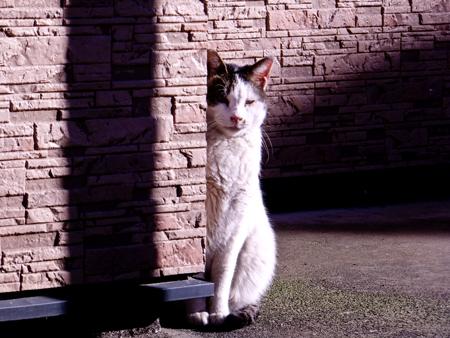 猫の肖像3b.jpg