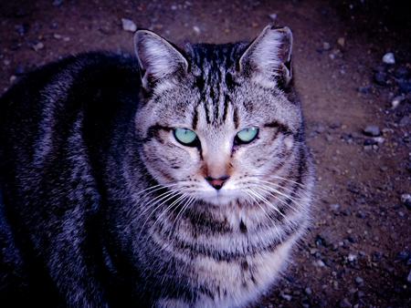 猫の肖像b.jpg