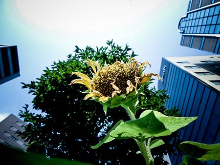 真夏の日web.jpg