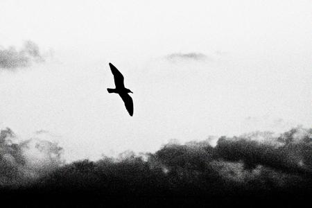 飛翔2b.jpg