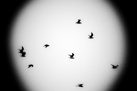 飛翔4b.jpg