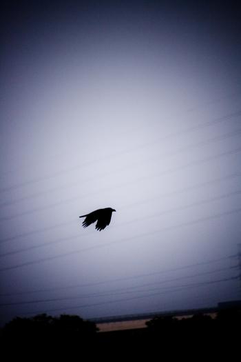 飛翔b.jpg