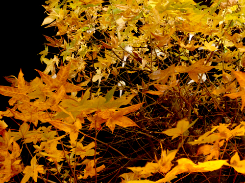 鳥と木burogu .jpg