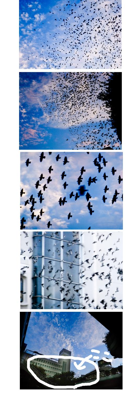 鳥の群れ.jpg