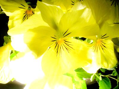 黄色2b.jpg