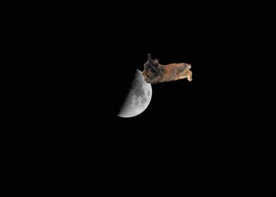 月とうさぎ.jpg