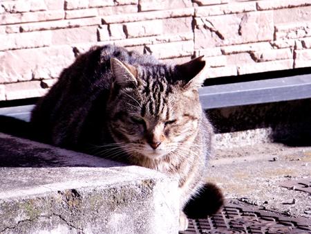 猫の肖像1b.jpg